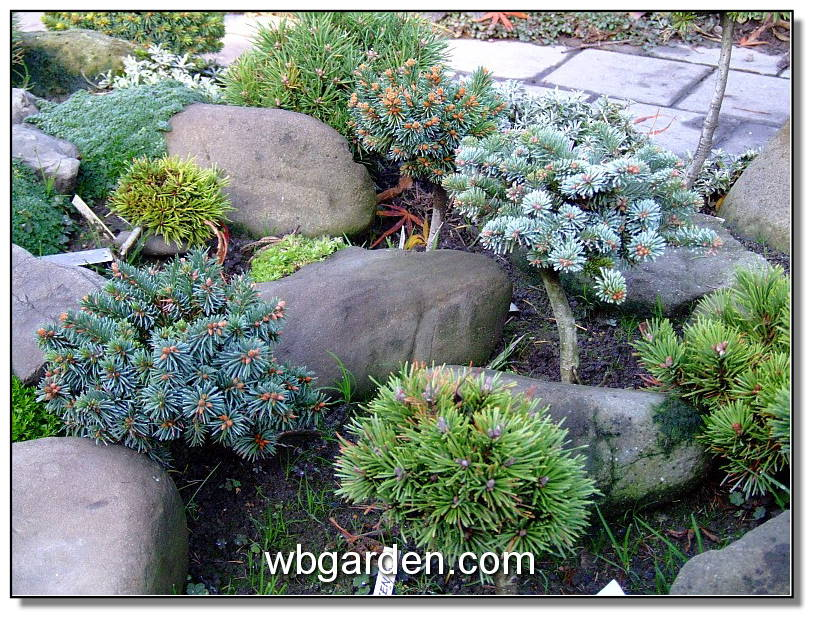 In garden design lay out keep it simple for Dwarf trees for small gardens